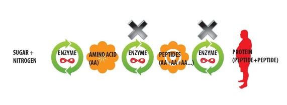 Conventional Fertilizer Health