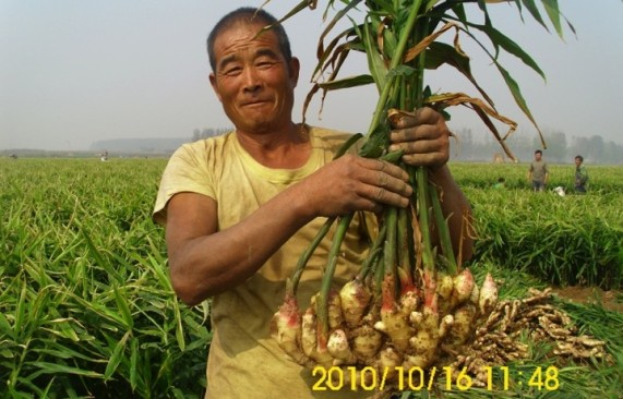 Happy Farmer_1