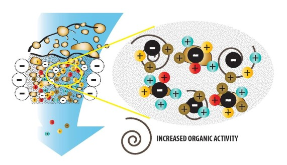 Increased Organic Activity