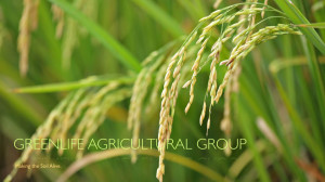 GreenLife Agricultural Group ~ Making the Soil Alive